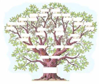 arbre-genograme.jpg